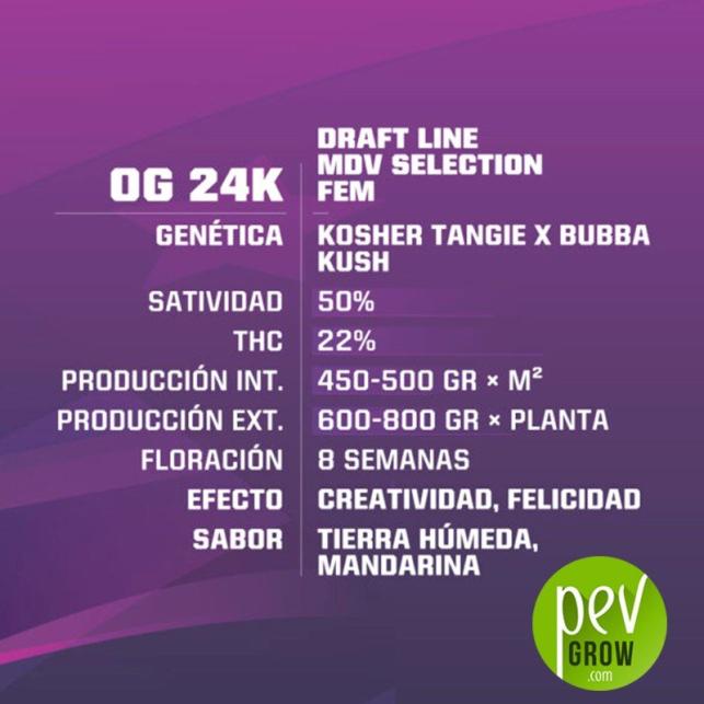 OG 24K - BSF Seeds