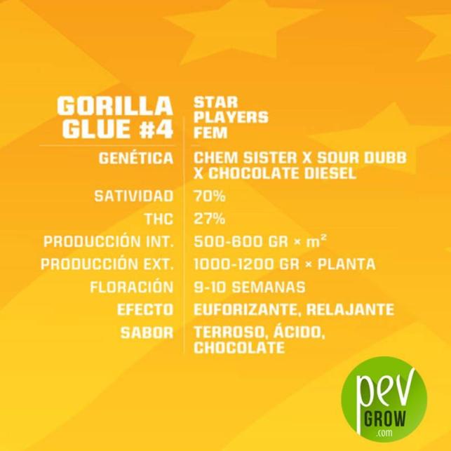 Gorilla Glue 4 - BSF Seeds