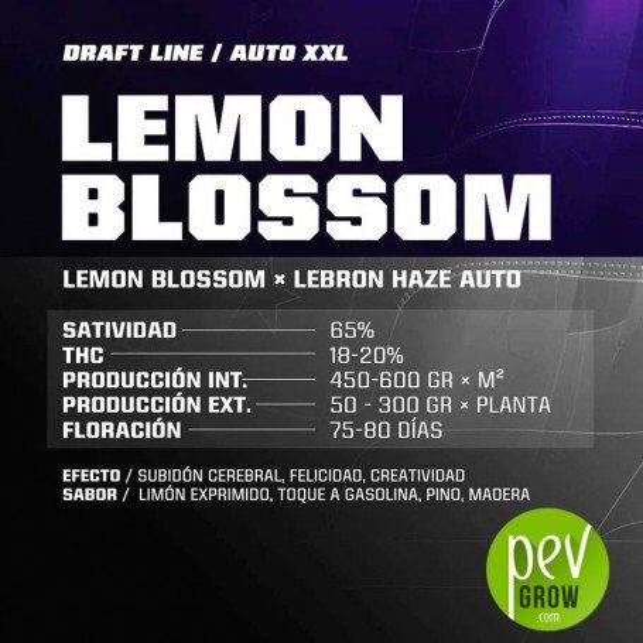 Lemon Blossom XXL Auto - BSF Seeds