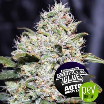Auto Godzilla Glue - BSF Seeds