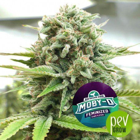 Moby-D - BSF Seeds