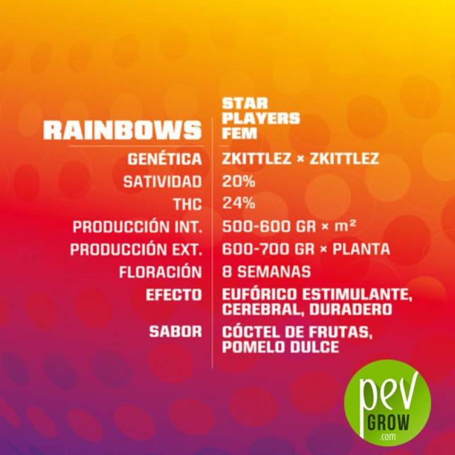 Rainbows - BSF Seeds