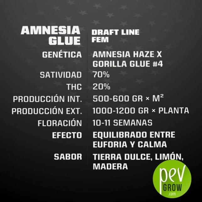 Amnesia Glue - BSF Seeds