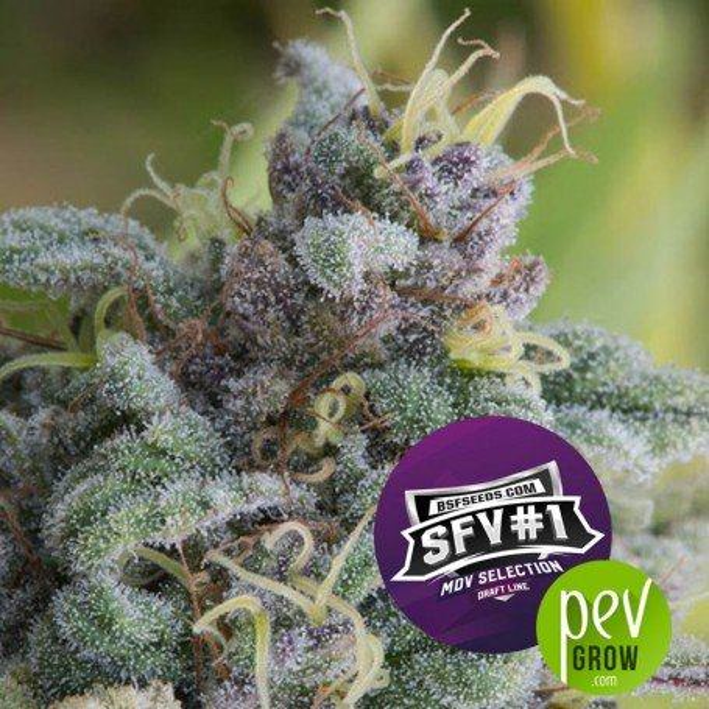 SFV 1 - BSF Seeds