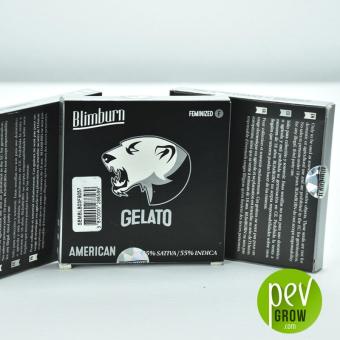 Gelato Blimburn Seeds