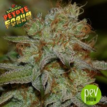 Peyote Forum - Seedsman