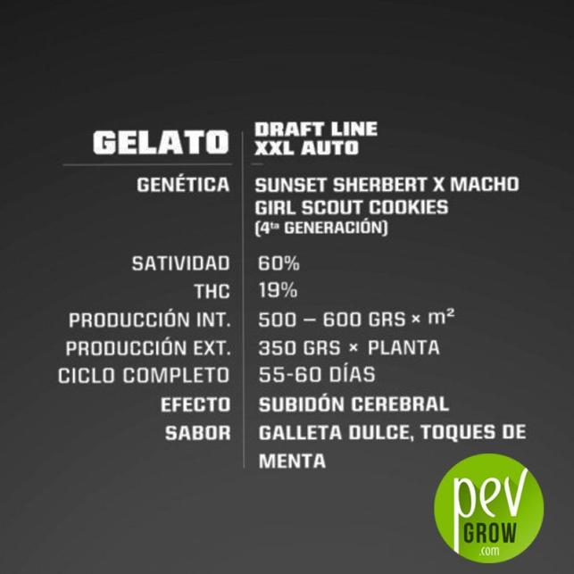 Gelato XXL Auto - BSF Seeds