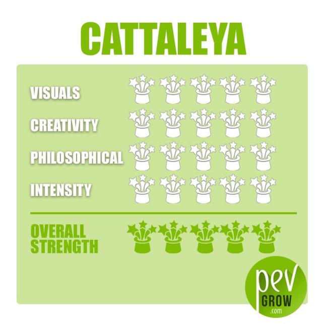 Trufas mágicas Cattaleya envase