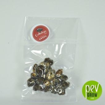 Magic truffles Cattaleya package