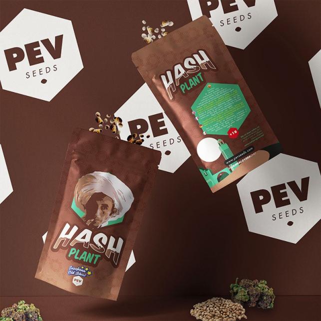 Hash Plant PEV Bank Seeds