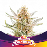 2 Rainbows by BSF Seeds
