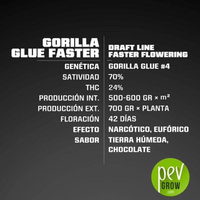 Gorilla Glue Faster - BSF Seeds