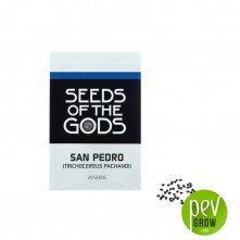 Graines San Pedro