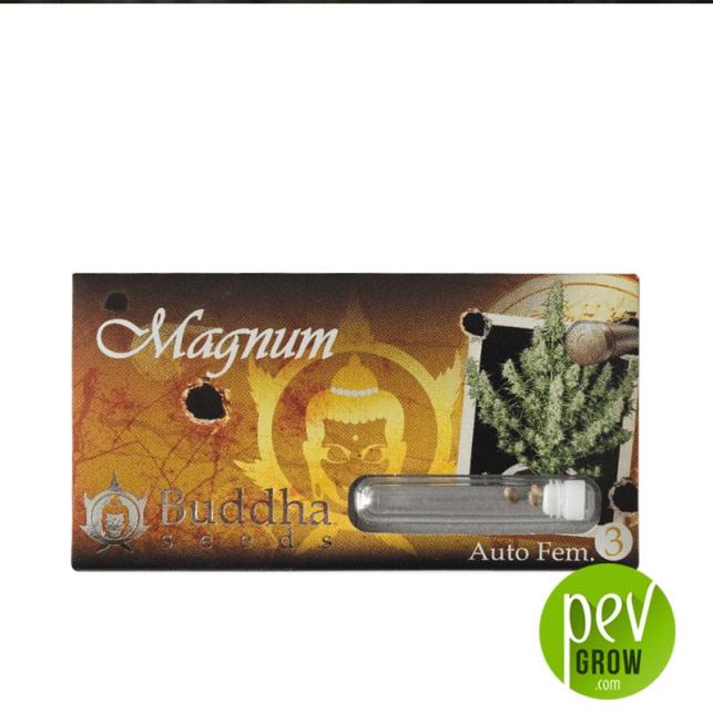 Magnum Auto - Buddha Seeds