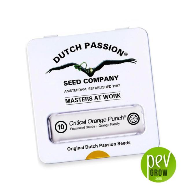Critical Orange Punch - Dutch Passion