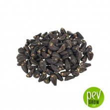 Ipomea Morning Glory Seeds