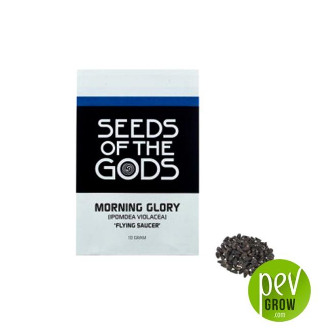 Semillas Ipomea Morning Glory