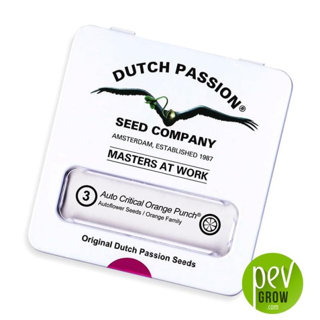 Auto Critical Orange Punch - Dutch Passion