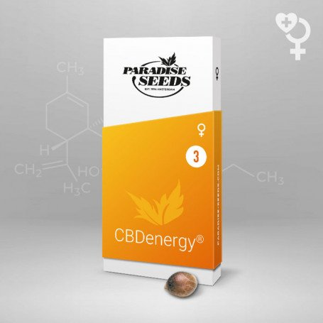 CBDenergy - Paradise Seeds