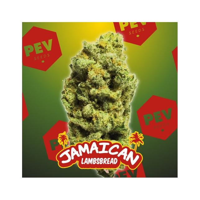 Jamaican Lambsbread - PEV Bank Seeds