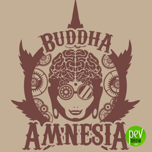 Amnesia Classic de Buddha Seeds