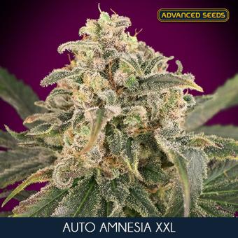 Auto Amnesia XXL