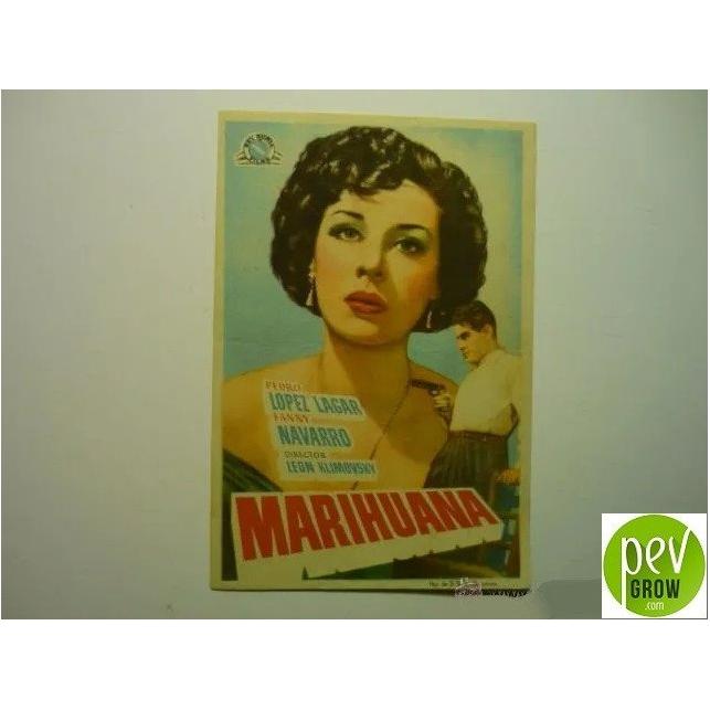 Postal de la película marihuana 1950 -  León Klimovsky