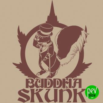 Buddha Skunk
