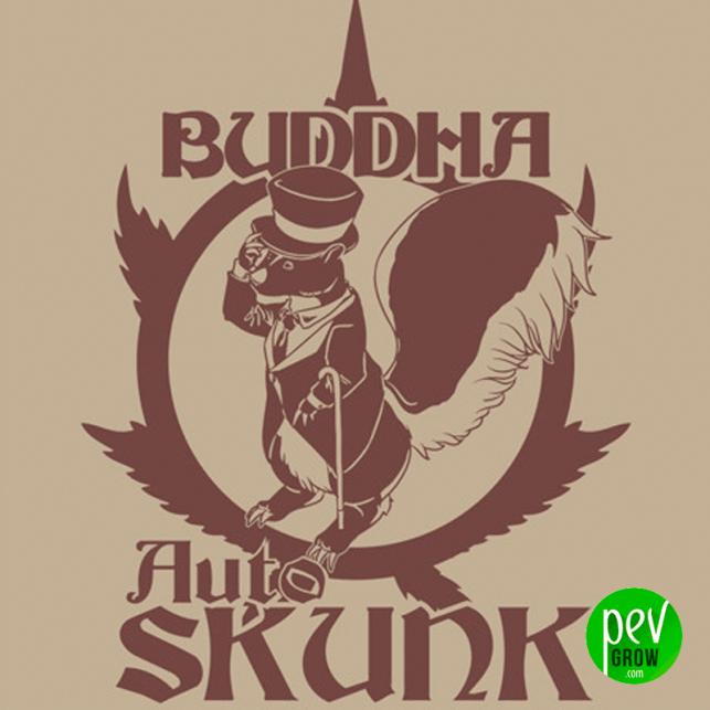 Buddha Auto Skunk