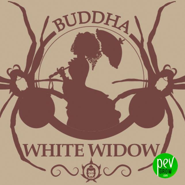 Buddha White Widow Classic