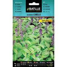 Cannelle basil seeds