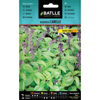 Basilic cannelle 1,25gr.