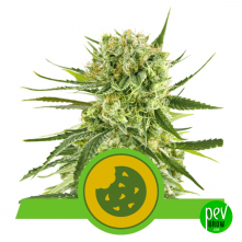Royal Cookies Automatic