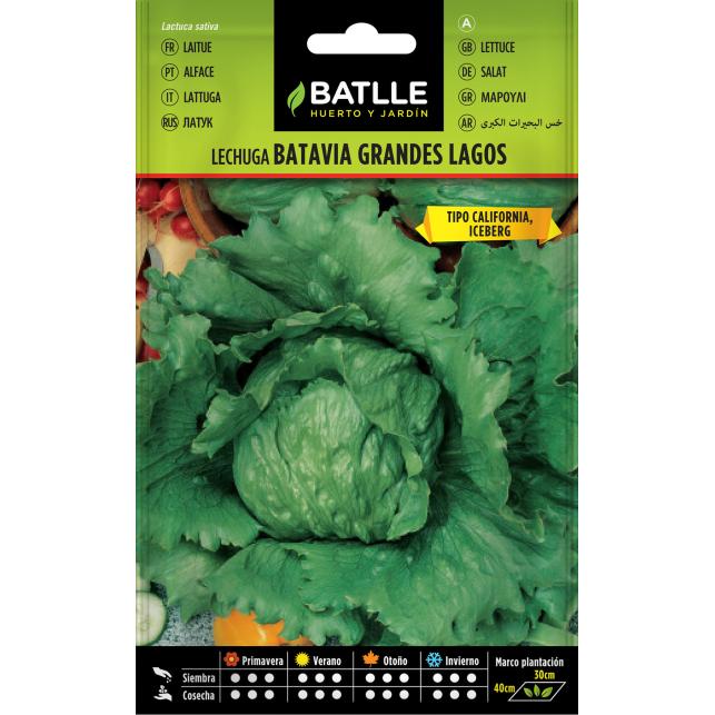 Semillas de Lechuga Batavia 6 gr.