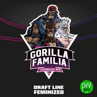 Gorilla Familia BSF Seeds (Mix)