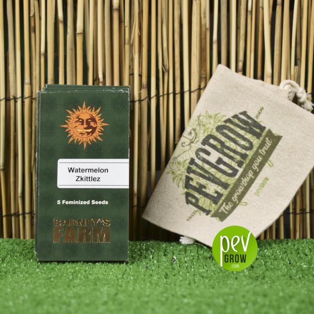 L'emballage de la souche Watermelon Zkittlez de Barneys Farm repose sur un roseau et une pelouse verte.