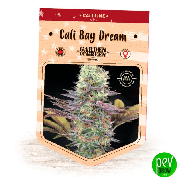 Cali Bay Dream