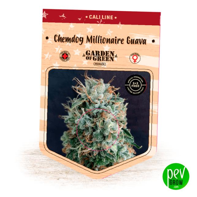 Chemdog Millionaire Guava