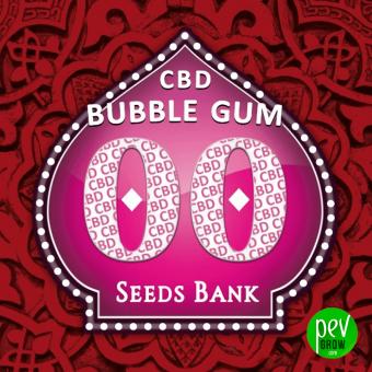 Bubble Gum CBD