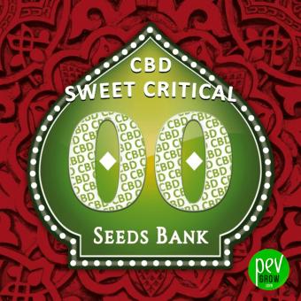 Sweet Critical CBD