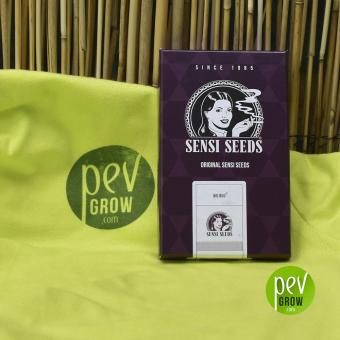 Big bud Fem de Sensi Seeds en su paquete original