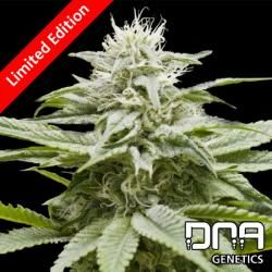 Training Day DNA Genetics