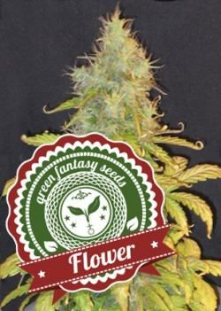 Flower Auto Green Fantasy