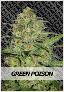 Green Poison Auto Zambeza Seeds