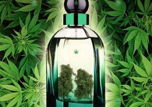 les meilleures techniques de culture pour vos plantes de cannabis. Black Bedroom Furniture Sets. Home Design Ideas