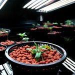 hydroponics-nutrients