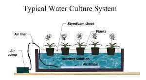 water-culture5