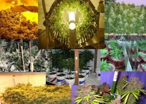 Different-Kinds-of-Marijuana-Indoor-Growing-Methods
