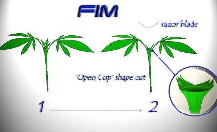 12f074d495847731c3dabe98746501b5.0.FIM_.jpg.atch_