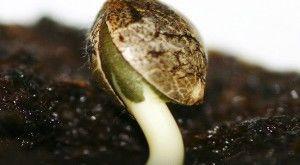 Germina-tus-semillas-El-Bruixot-600x330